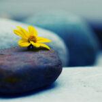 Kako se nositi sa smrću: zen mudrost